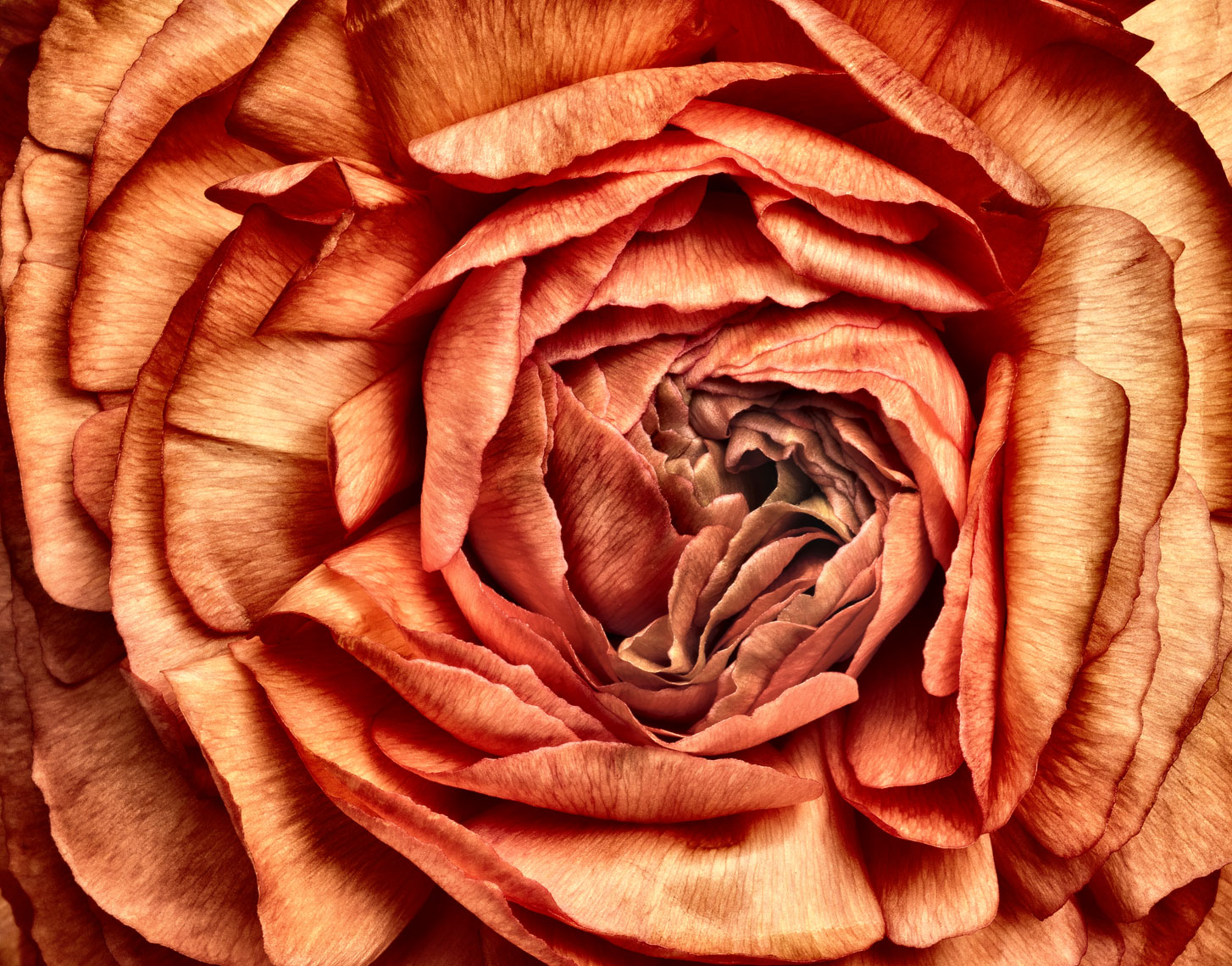 Floral-Art_Orange_Renuculas_crop-EditA.jpg